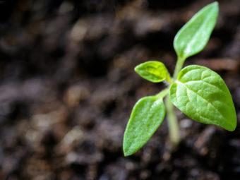 Grönt blad spirar ur mörk jord.