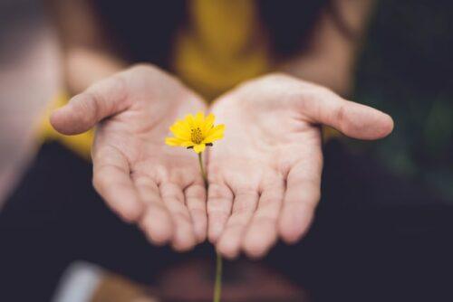 Händer håller fram en gul blomma.